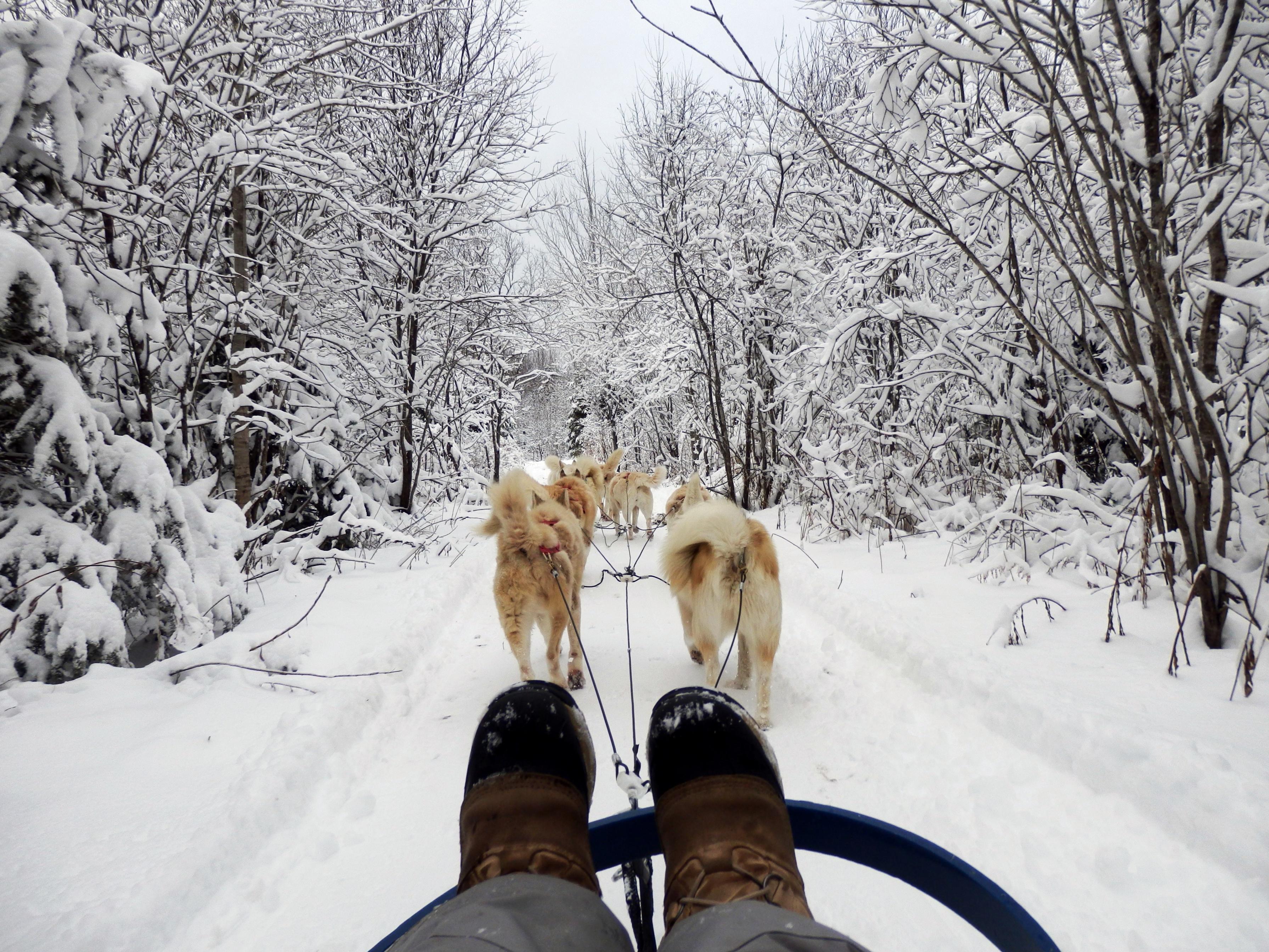 comment vivent les animaux en hiver