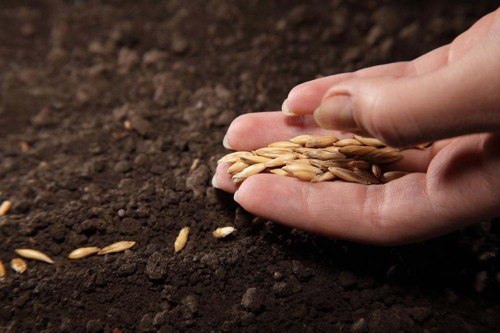 WHV_PVT_Australie_Planting_Planter_Graines
