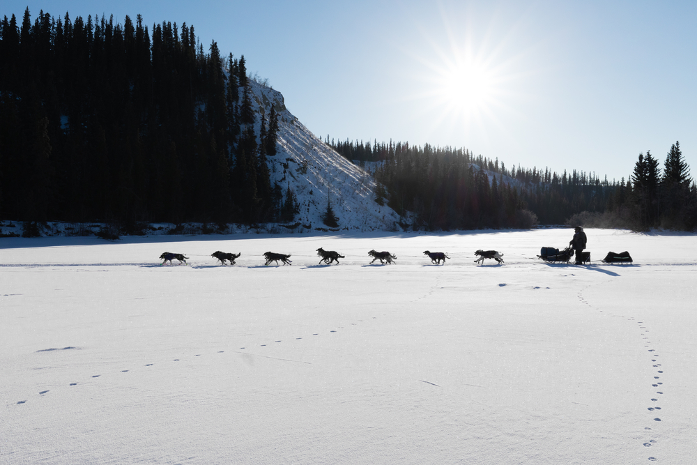 musher-chiens-pvt-canada