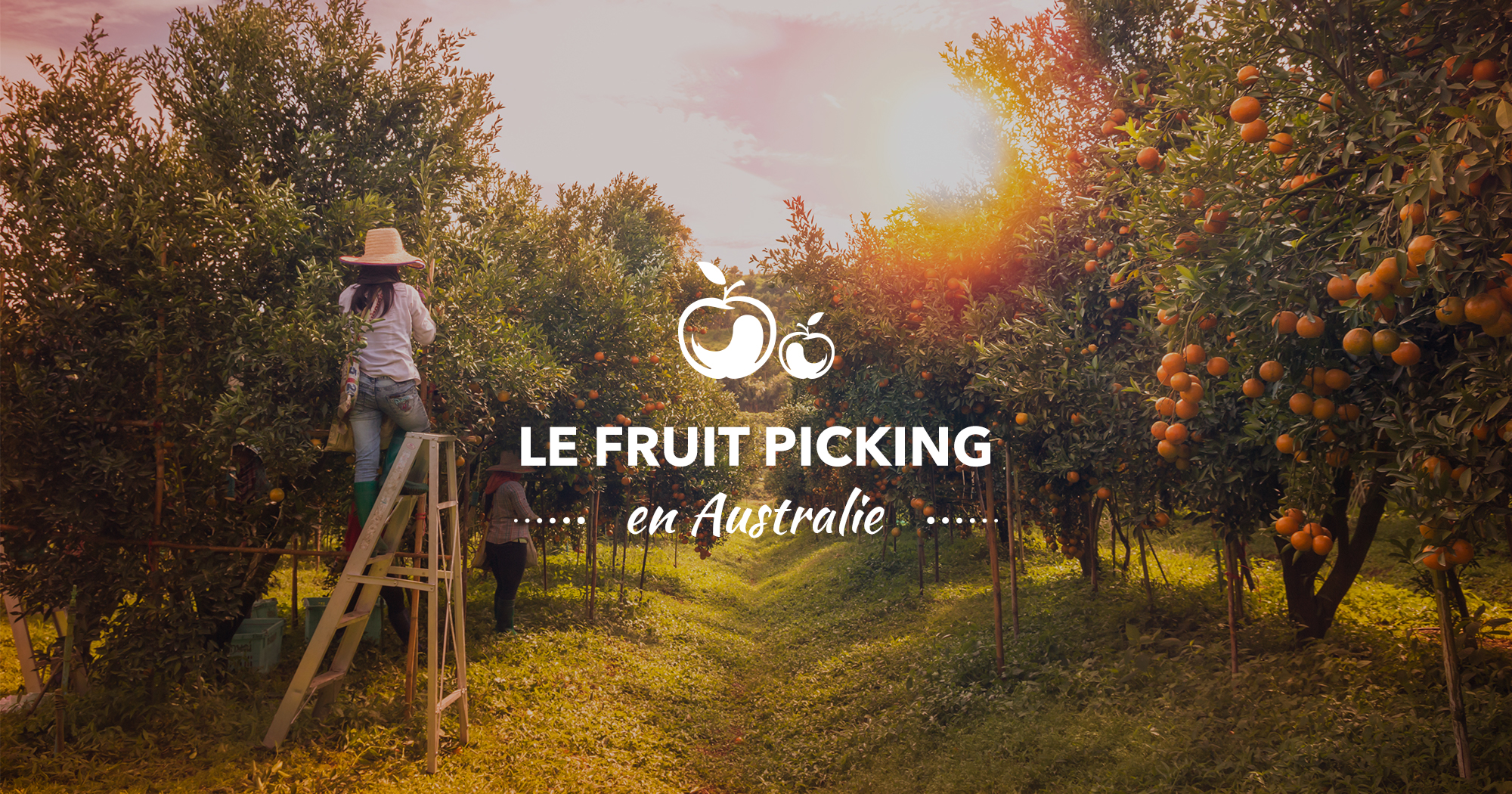 visuels-dossiers-whv-australie-fruit-picking