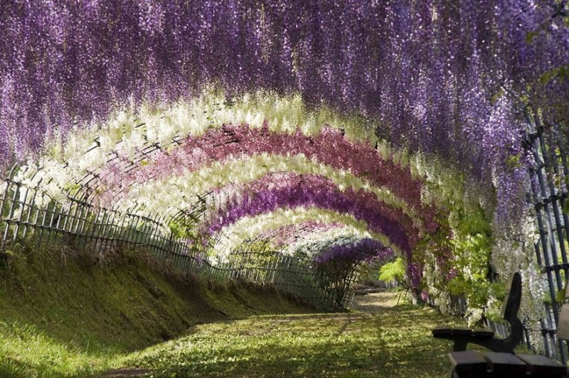 Les jardins fantastiques de kitakyushu Wisteria flower tunnel path in japan