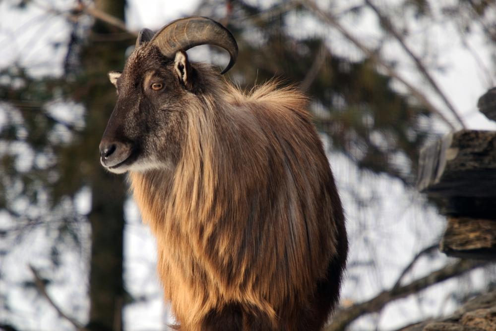 foto de Les animaux de Nouvelle Zélande