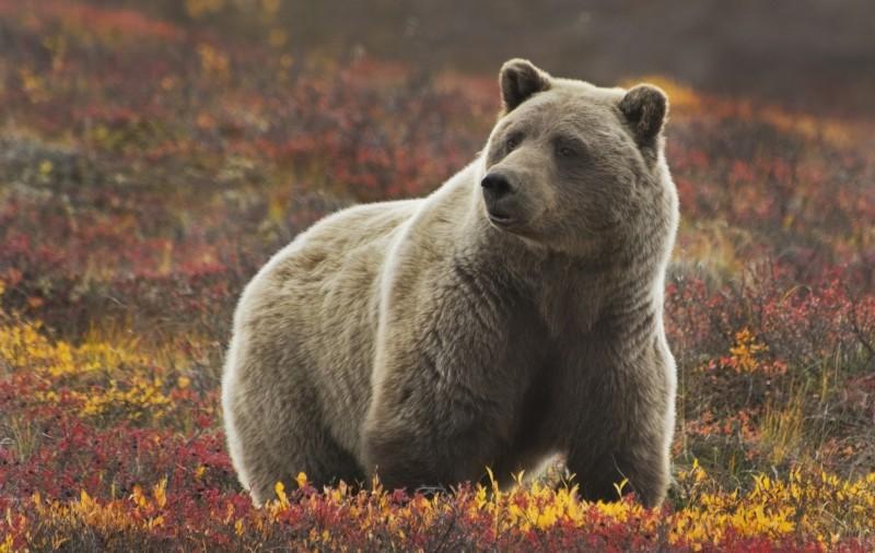 http://pvtistes.net/wp-content/uploads/2013/06/grizzli-alaska-800x506.jpg