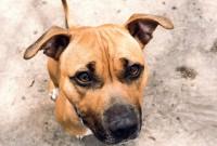 Etre bénévole à la SPCA Montréal (protection des animaux)