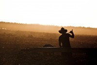 Ramasser des courgettes dans le Queensland, en Australie