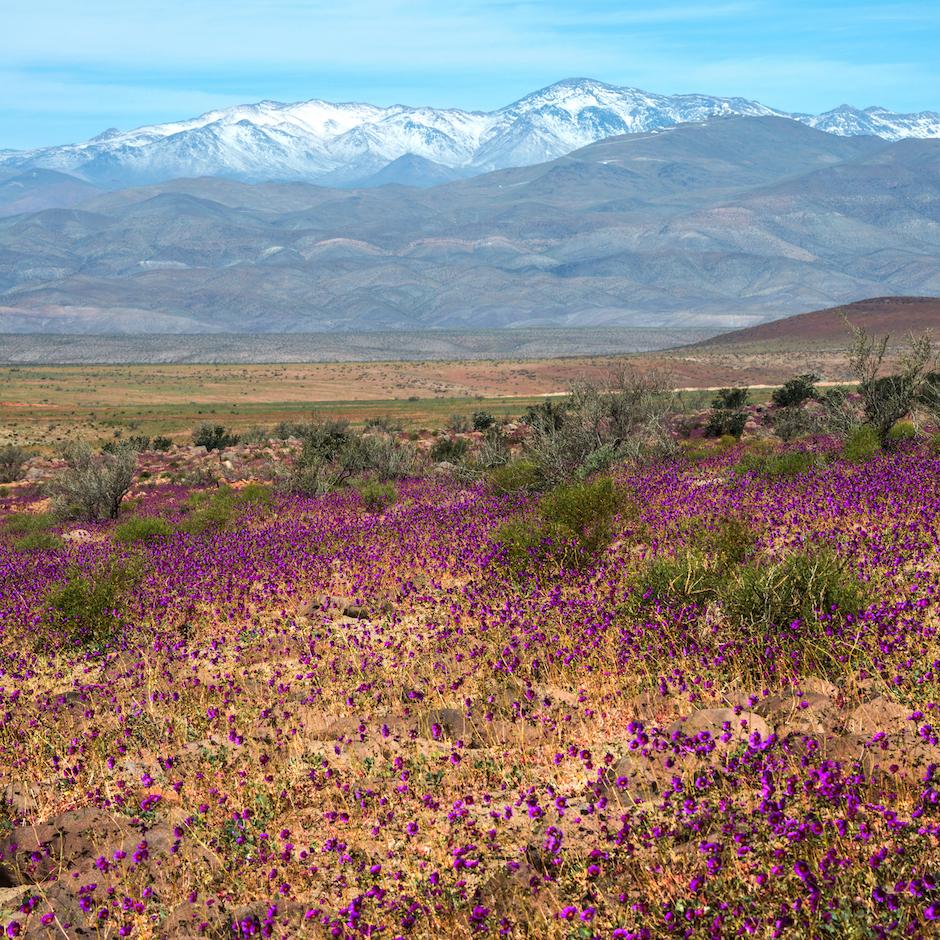 Desert Atacama Chili El nino
