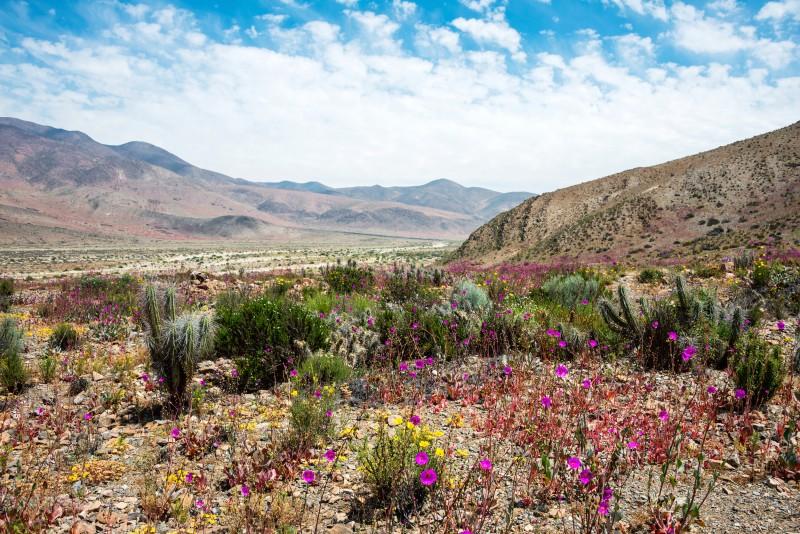 Desert Atacama - El Nino