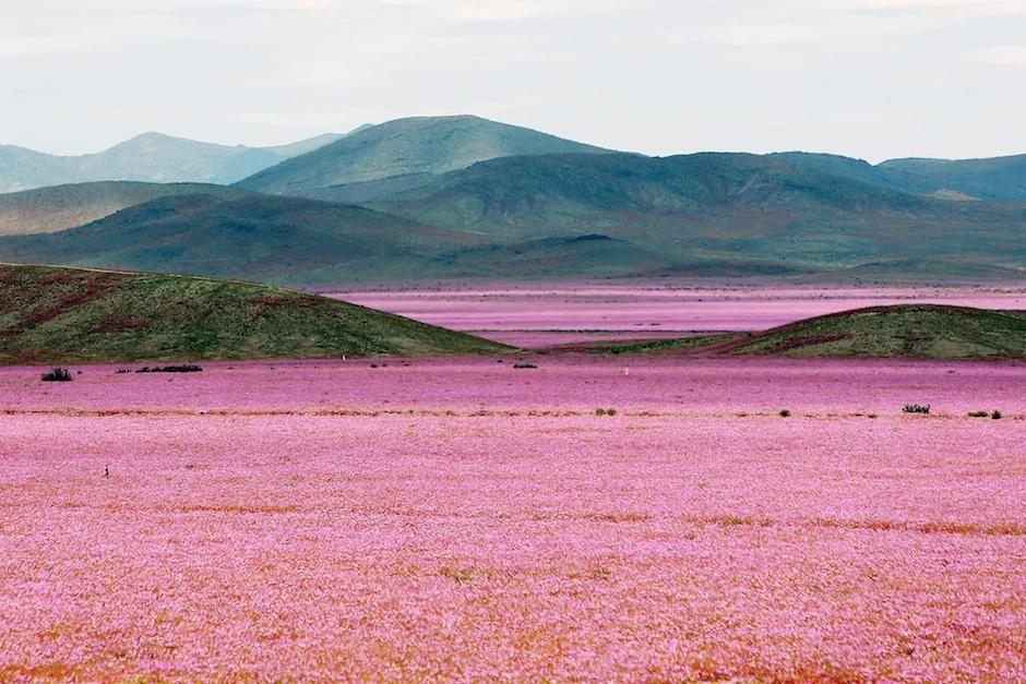Mario Ruiz Desert Atacama Chili