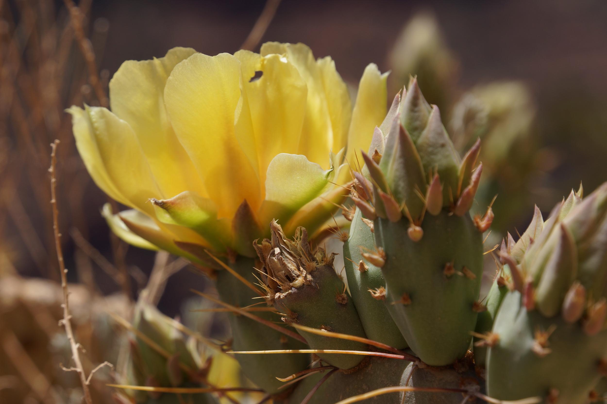 road-trip-usqa-vegetation-grand-canyon