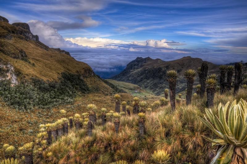 Paramo, Nevado del Ruiz - Colombie