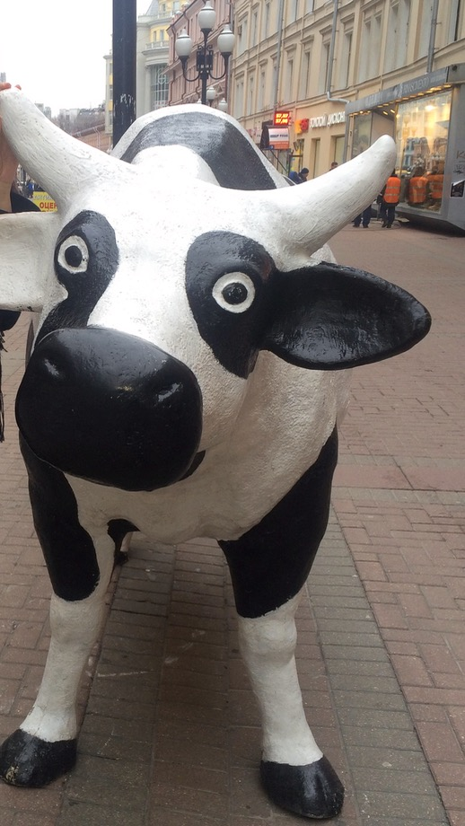 PVT a Moscou - Vache My-my
