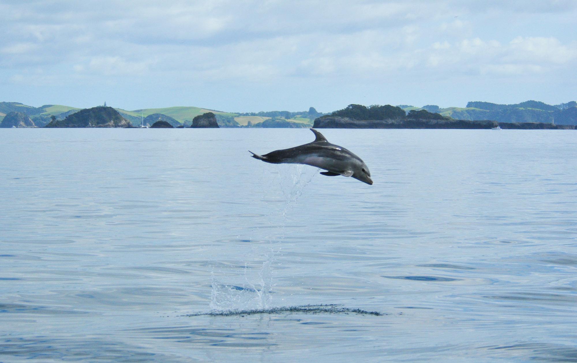 Dauphin - Deck hand catamaran - Nouvelle_Zelande