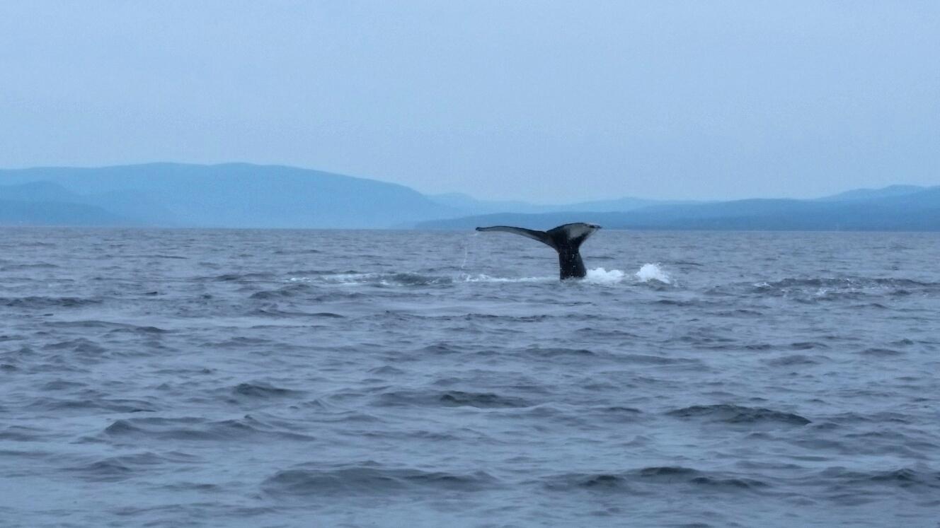 Croisiere aux baleines - parc Forillon - Canada