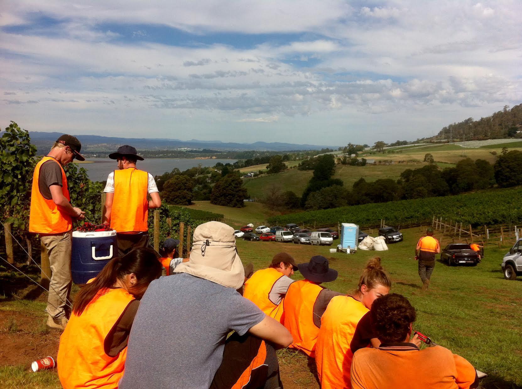 anthony-fruit-picking-en-tasmanie