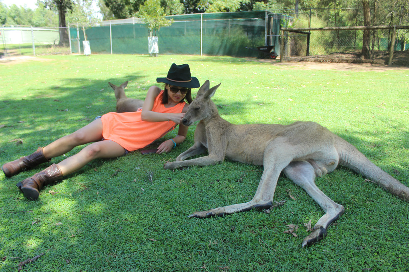 sophie-kangourou-lone-pine-koalas-sanctuary