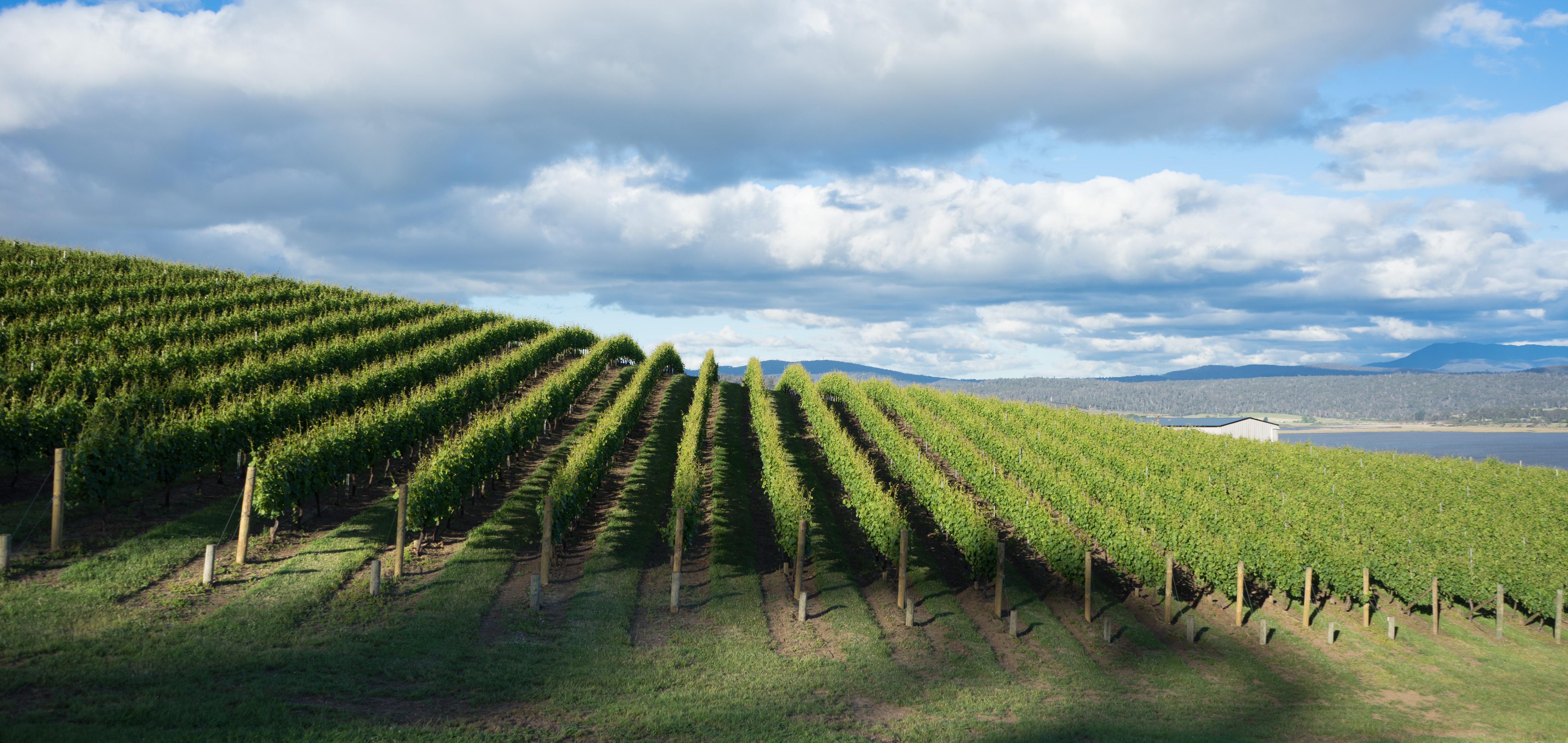 Harvest-tasmania