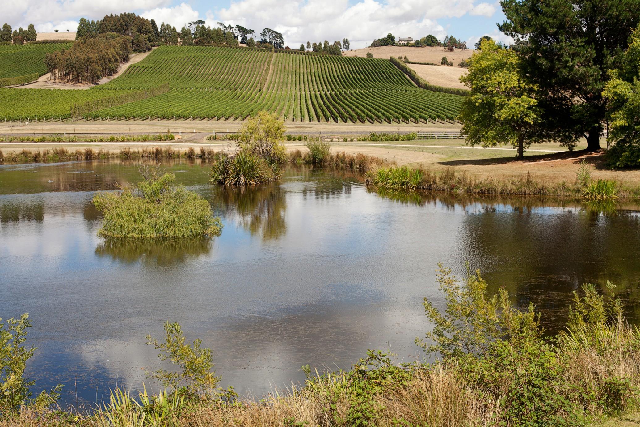 vigne-tasmanie-picking