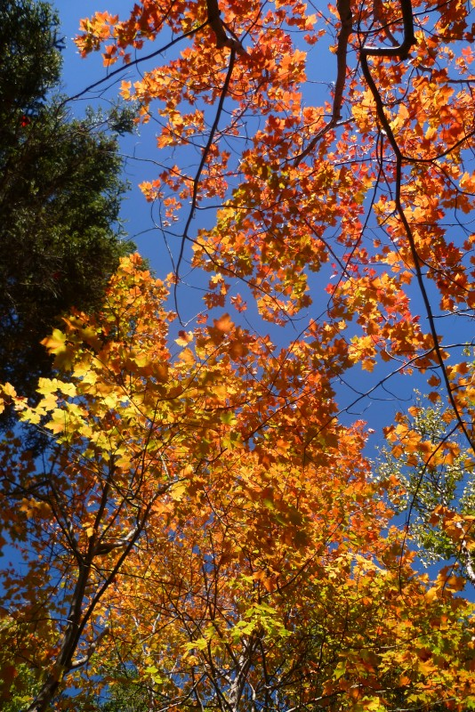03-automne-acadie