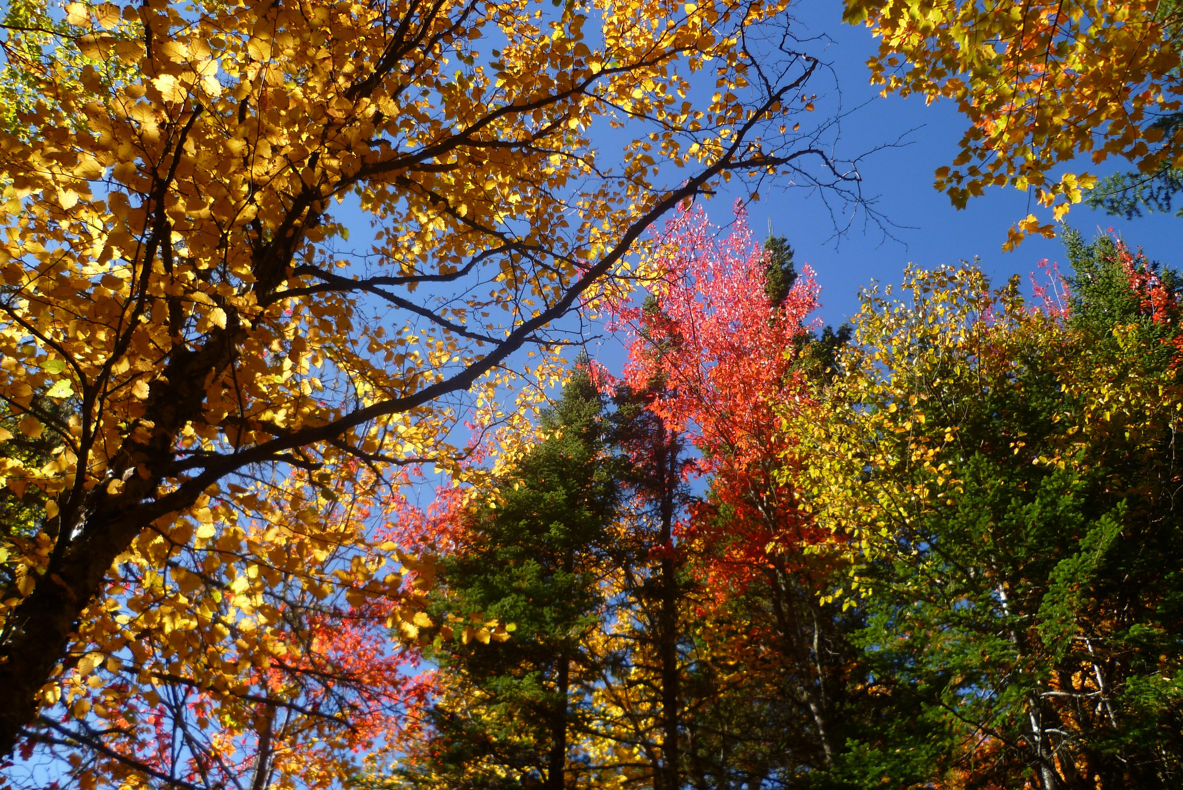 05-automne-acadie