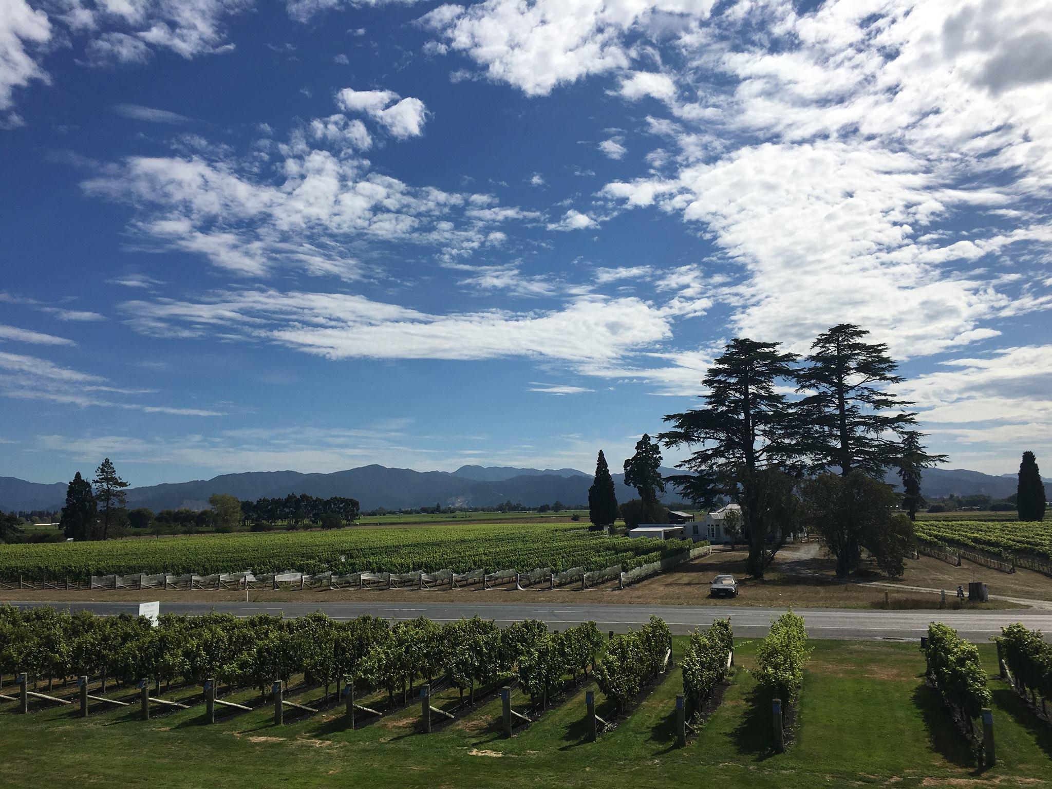 nz-southisland-blenheim-vineyard-meredith
