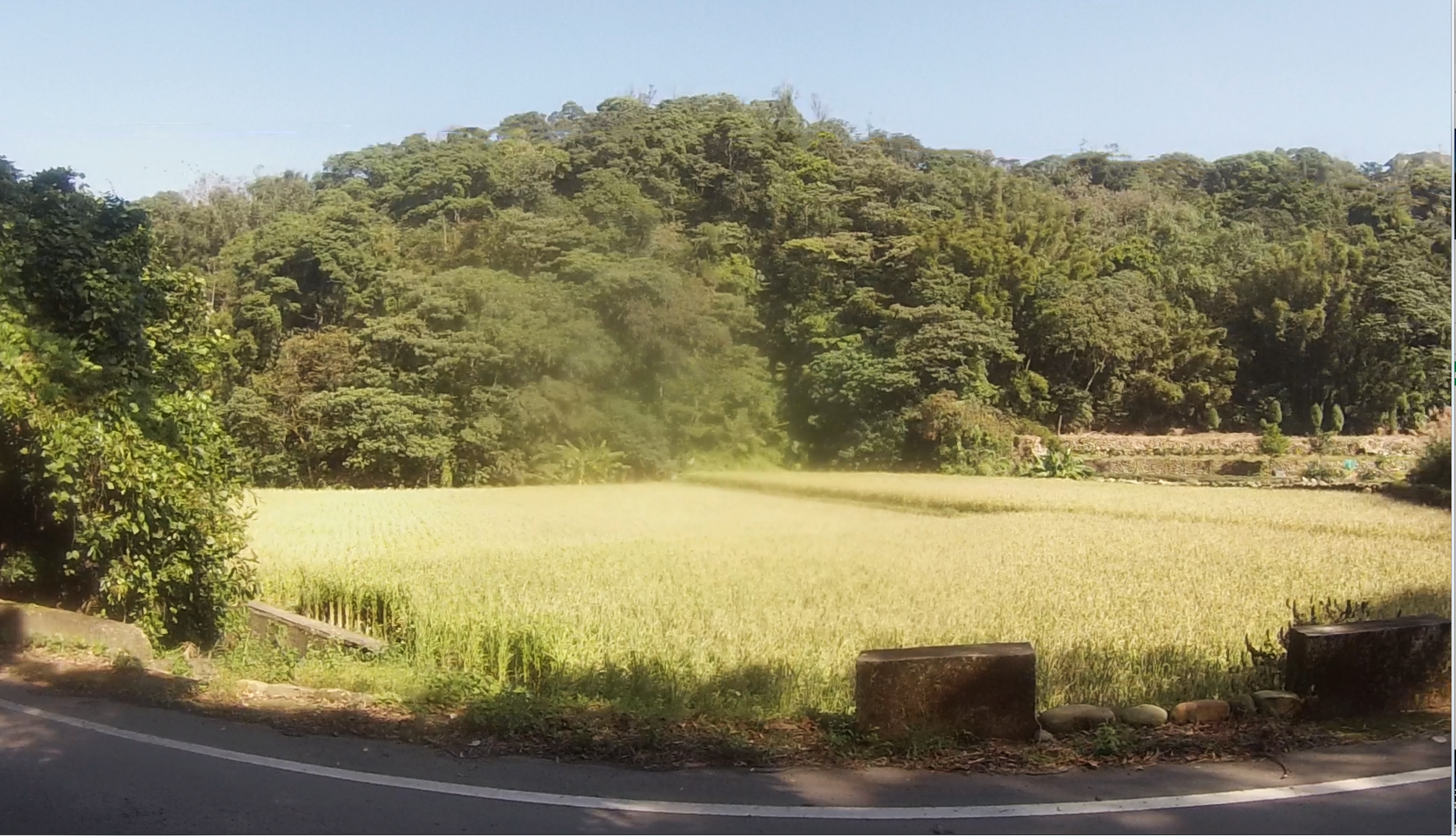 rizieres-taiwan