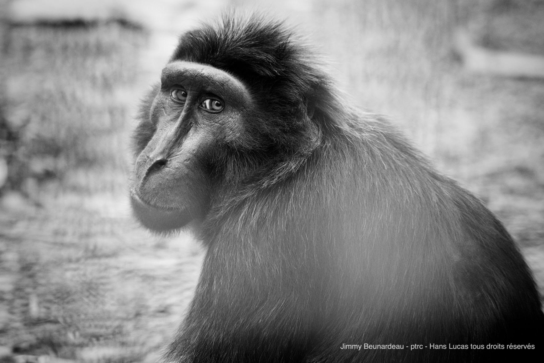 macaque-a-crete-jimmy-expo-photo