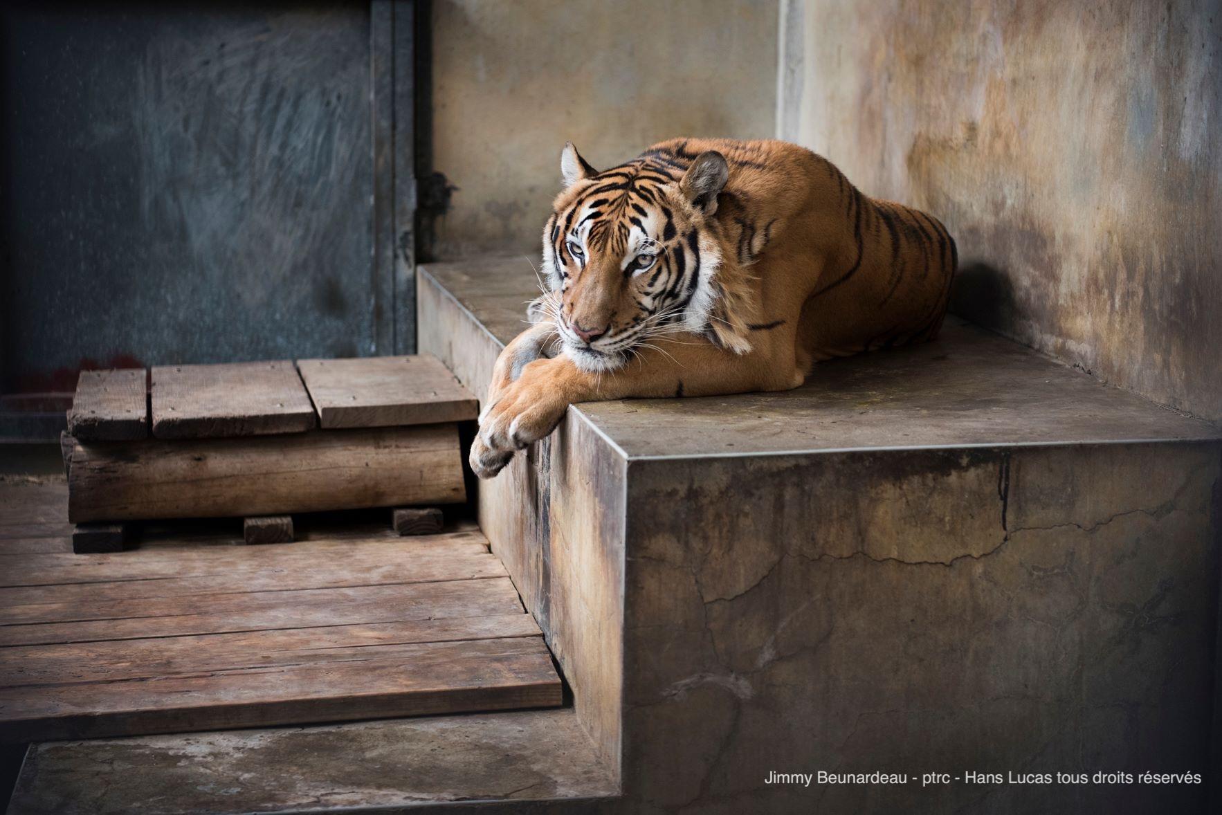 tigra-jimmy-beunardeau-expo-photo