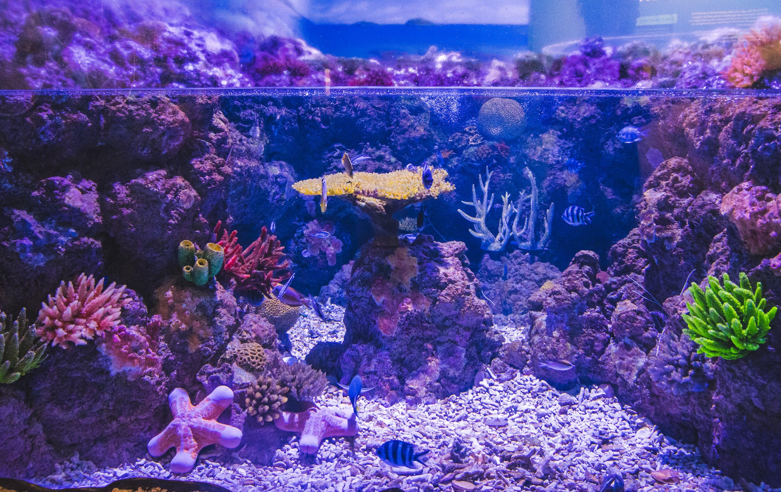 Aquarium de Cairns - Coral Atoll