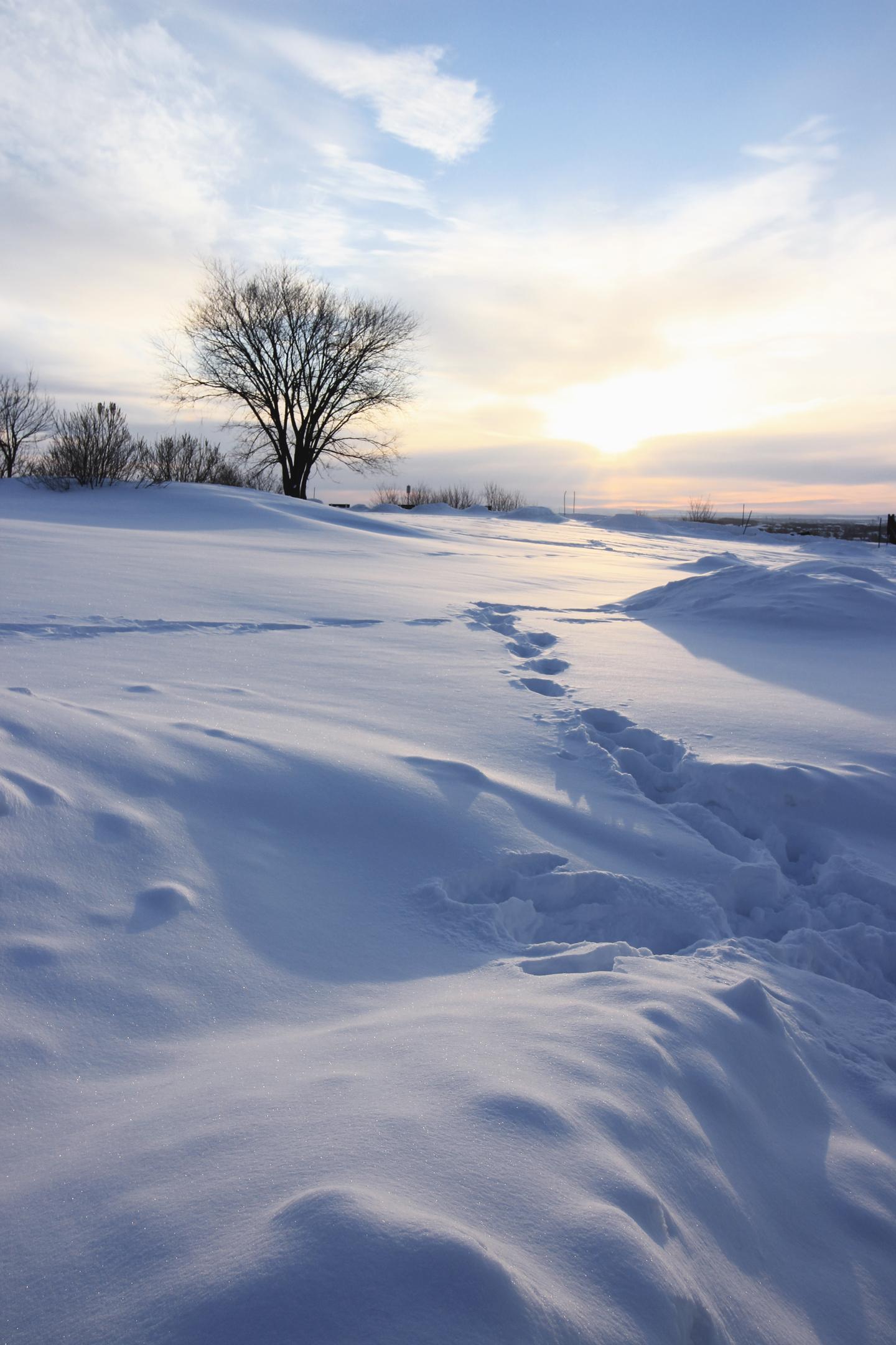 plaine-neige-aurore-quebec