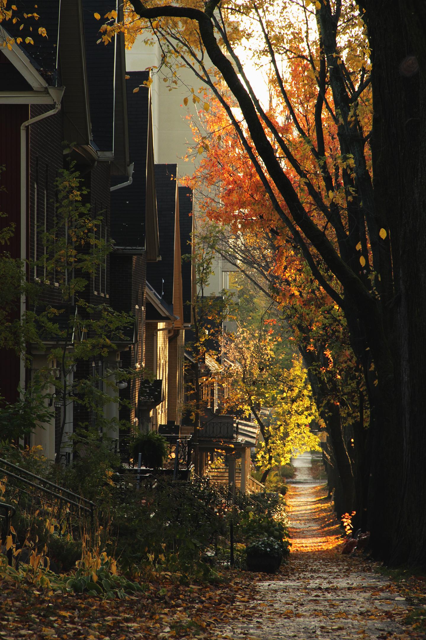 rues-automne-quebec