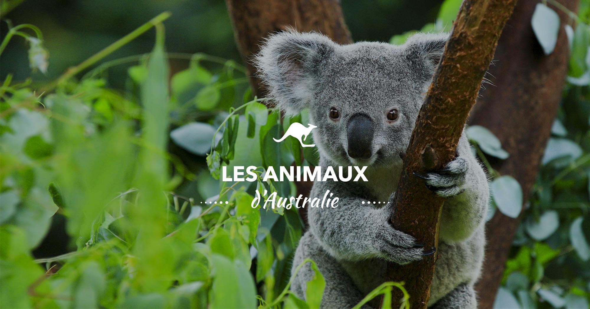 visuels-dossiers-whv-australie-les-animaux