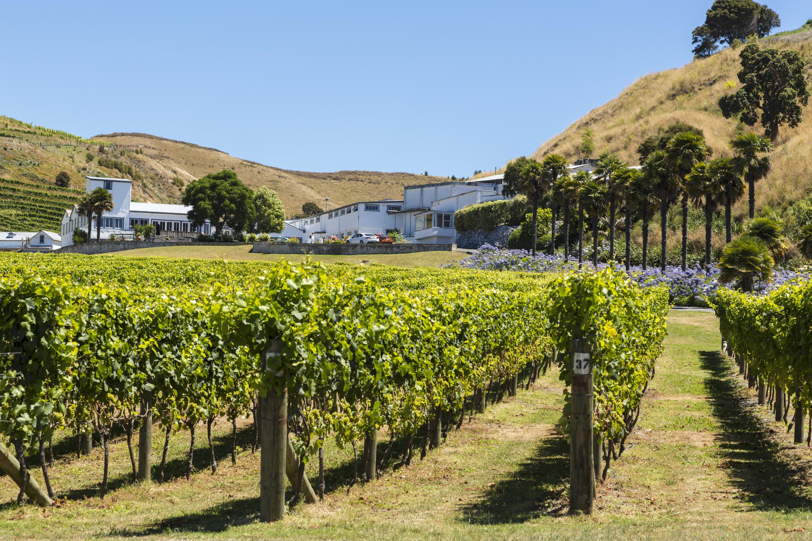 Sites de rencontre pour les agriculteurs NZ