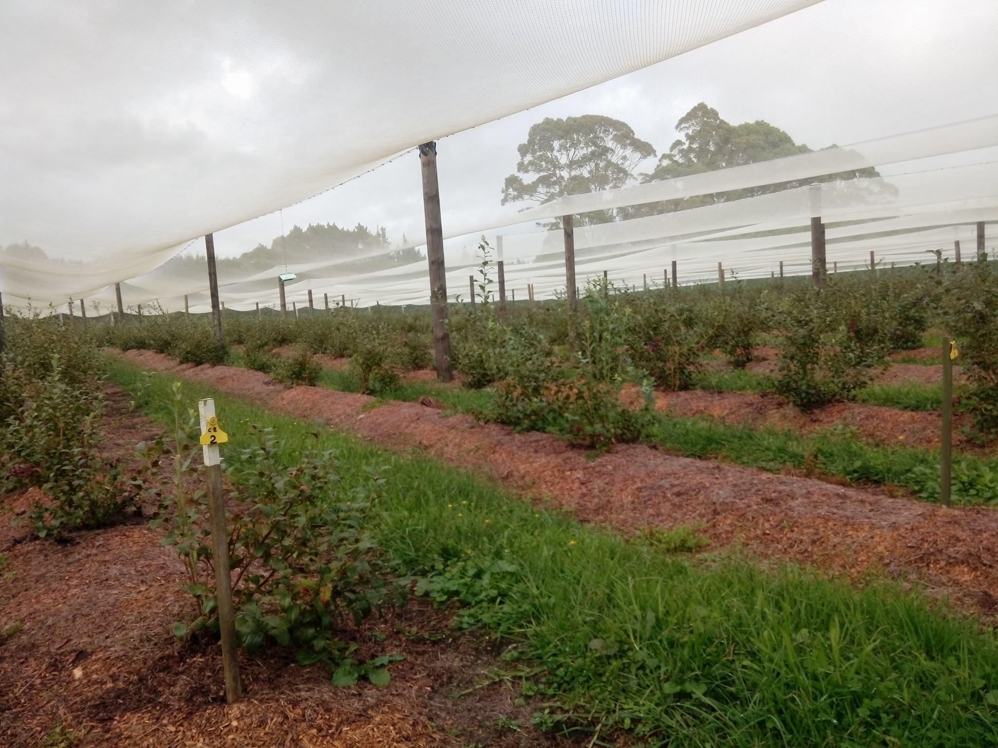 Orchards - Volontariat en Nouvelle-Zelande