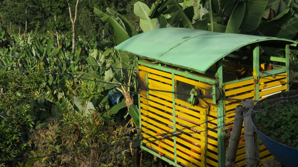 Jardin Le Petit Tresor De La Region D Antioquia En Colombie