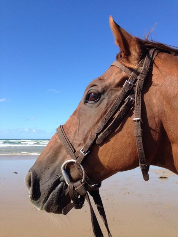 pvt-australie-laura-cheval