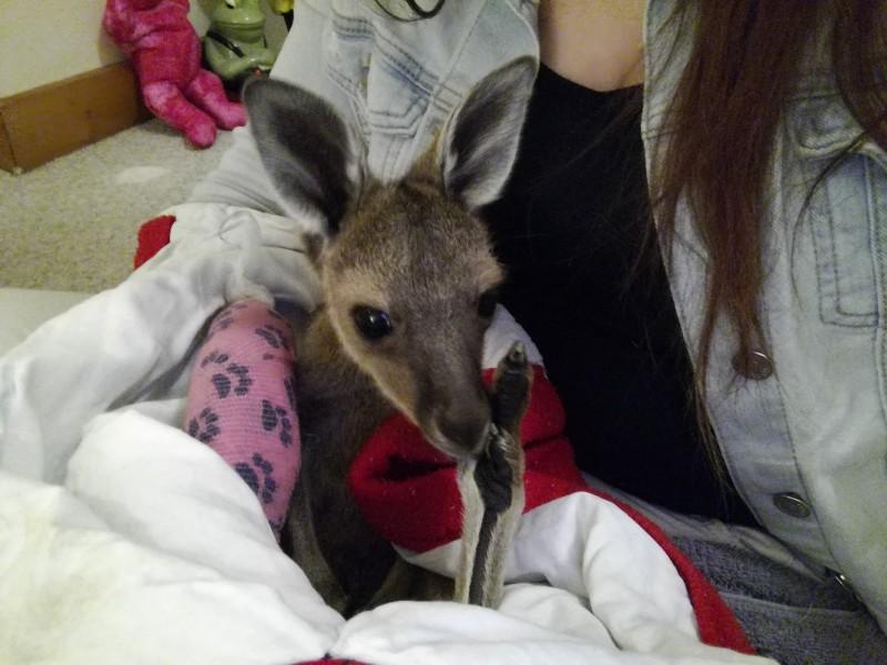 Elodie au pair PVT WHV Australie