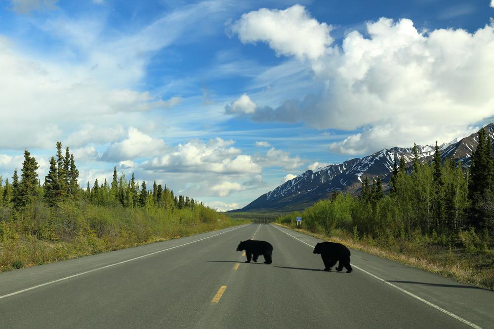 yukon-wildlife-pvt-canada