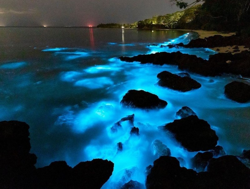 Bioluminescent Plankton Jervis Bay Australie