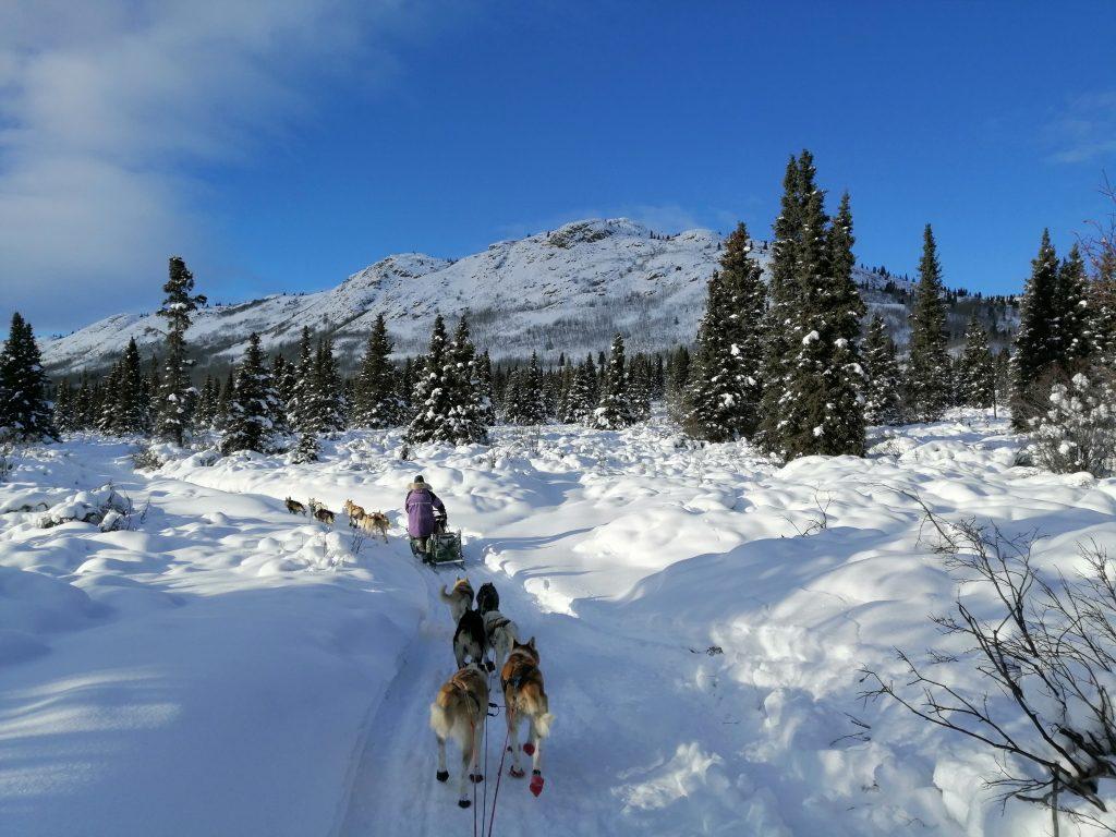 Simon PVT Canada chiens de traineaux