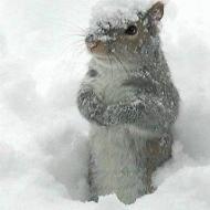 Avatar de marmotte!